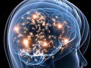 neurociências - universidade da inteligencia